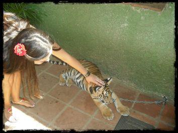 Festinha ao Tigre.JPG